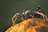 2:1 Spider Macro (Jonathan Hartzell / the Archangel) Tags: detail macro up closeup bug insect 50mm spider nikon close 21 arachnid dxo jpg topaz adjust 18d d90 cs6 denoise macrolife