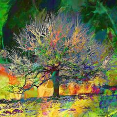 Tree of Life (Lemon~art) Tags: tree treeoflife colour texture manipulation tmialphabet1