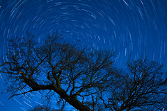 Star Trail Piggy Lane (sjburton92) Tags: stars startrail astrophotography samyang york yorkshire outdoors countryside country trees landscape polaris 14mm f28