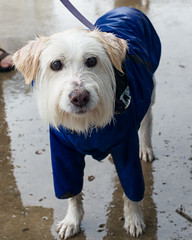 Rainy Day Dog (-Dons) Tags: usa dog rain austin texas unitedstates tx raincoat austinfarmersmarket