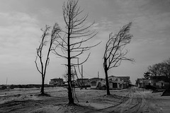 Seis meses depois do furaco Sandy ... (galeriapt.gaudiumpress) Tags: blackandwhite usa newyork tree fire aftermath unitedstates sandy northamerica estadosunidos charred breezypoint damages norteamerica superstorm sandystorm gustavokralj gaudiumpress noreamerica