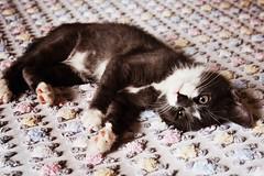 +++++ (s.claritie) Tags: cute love cat relax nice bed bedroom kitten sleep sleepy lovely