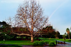 Botanical Gardens Wollongong NSW Australia (Art & Photography by Michellea Sefton) Tags: trees tree nature garden rainbow nikon botanicalgardens wollongong d3100