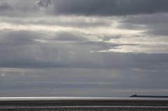 lone gull (Wendy:) Tags: morning water silver sand seagull horizon pools lowtide sandymount dublinbay