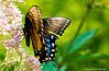 Harmony! (Leo Lucky) Tags: flower macro nature colors beautiful closeup butterfly georgia nikon colorful widlife pawan 55200mm nespal amazingdetails d5100