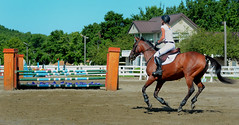 Fence Approach (hpaich) Tags: park desktop new wallpaper horse fence newjersey jump ride background nj competition course jersey rider equestrian desktopwallpaper equine tack desktopbackground gait compete woodedge newjerseyhorsepark njhorsepark woodedgeatthepark