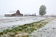 Antelope Flats Snowfall (Kirk Lougheed) Tags: autumn snow fall barn landscape wyoming teton tetons snowfall grandteton moulton grandtetonnationalpark mormonrow antelopeflats moultonbarn mormonbarn johnmoulton