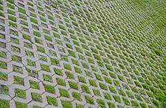 Urban garden. (Brian K. Brown) Tags: grass squares patterns bostonma