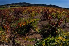 Petite Sirah Field Stone Winery (Kent Freeman) Tags: pentax winery valley da napa alexander k5 fieldstone 1017mm