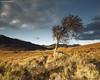 Trossachs Tree (SwaloPhoto) Tags: autumn tree clouds zeiss scotland nationalpark shadows availablelight lochlomond ze stirlingshire thetrossachs stronachlachar thehighlands locharklet canoneos5dmkii distagont2821 b829 distagon2128ze
