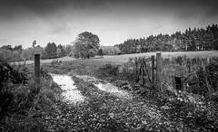 Field near Old Deer Aberdeenshire in autumn (seascape steve) Tags: autumn trees white black canon scotland hand aberdeenshire sigma fields held 400d