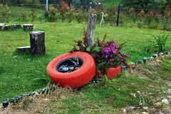 En medio del campo (photocenter48) Tags: verde rojo rboles colombia grama rueda vino troncos antioquia tpico botellas launin gilbertopizanoarroyave
