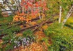 High Line Color Palette (HorsePunchKid) Tags: thehighline gansevoortwoodland fhl30