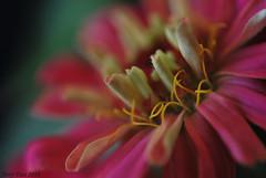 Beautiful mother nature (Tony Dias 7) Tags: flower macro nature flor mother