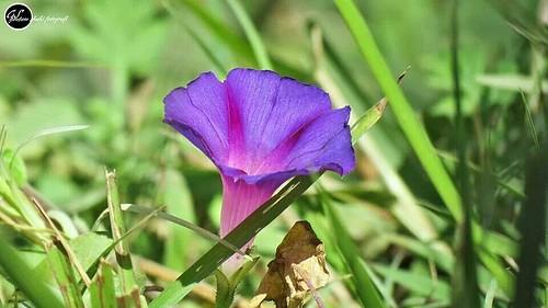 in silent silent blue bell flower in park un.