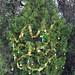 Trees_of_Loop_360_2013_024