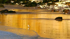 Baywatch (KerKaya) Tags: sunset seascape reflection golden cliffs baywatch fz200 kerkaya inspiringcreativeminds
