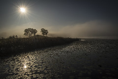 the morning star (olsonj) Tags: morning trees sun lake fog