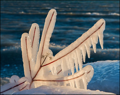 Icy Red Twigs (Rodrick Dale) Tags: red lake ontario canada tree ice water icicle
