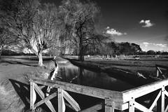 BushyPark_125Feb07 2014 (mdavies149) Tags: park wood uk bridge trees england sky bw white black london water clouds contrast reflections landscape michael nikon stream davies lickr bushy d600 clickx