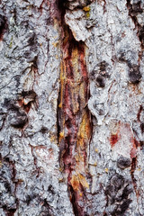 I is for ... incision in the bark (Woodacus) Tags: wood orange brown abstract tree art texture broken typography photo natural image bark font letter alphabet typedesign i ef70200mmf4lisusm canoneos5dmarkii