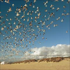 ¡¡¡A comer!!!! (John LaMotte) Tags: portugal nubes clouds infinitexposure nwn cielo caparica ilustrarportugal