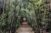 Il Giardino di Boboli - Florence, Italy (Cassie Dagostino) Tags: light plants green garden florence italu boboli tuscnay