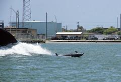 IMGP3034 (Ripper2860) Tags: ocean bay texas pentax corpuschristi dolphins k3 pentaxda18135