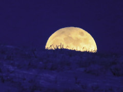 IMG_0906s (savillent) Tags: moon lunar penumbral earth shadow landscape sky snow ice arctic north climate photography canon point shoot camera tuktoyaktuk northwest territories canada astrology february 2017