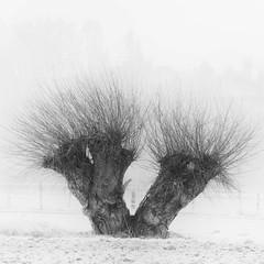 Ruhrwiesen (elseyjetter) Tags: mist nebel nebelstimmung morgenstimmung nature nrw fujifilm bw sw quadratischer zuschnitt