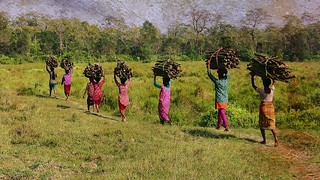 NEPAL, Royal Chitwan-Nationalpark, Nepalese in Goemarsch, after collecting wood on the way home, (serie) 15369/8086