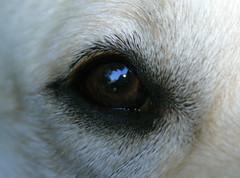 "ella eye • <a style=""font-size:0.8em;"" href=""http://www.flickr.com/photos/95808399@N03/8759279489/"" target=""_blank"">View on Flickr</a>"