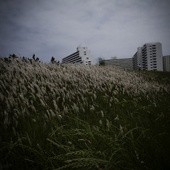 Riverside Waves of Weeds with Concrete Canyons (jacob schere [in the 03 strategically planning]) Tags: blue sky cloud grass japan clouds digital buildings river square landscape tokyo weeds weed skies apartment riverside cloudy jacob 4 communication clear grasses gr lucid runner iv ricoh kasai danchi m2c schere  dgr jacobschere lucidcommunication