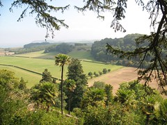 Trachycarpus fortunei in Dunster Castle grounds NT, looking towards the Bristol Channel, 2nd September 2011 (jrcollman) Tags: plants gardens places archived importedtags trachycarpusfortunei tplant jeffs13thaugustto11thseptember2011 dunstercastlentgdns dunsterandcastle