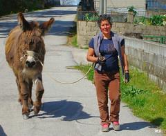 Águas Frias (Chaves) -  ...vindo de lavrar a horta ... (Mário Silva) Tags: portugal animal burro chaves aldeia trásosmontes 2013 ilustrarportugal águasfrias lumbudus