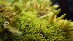 IMGP2806 (DragonDrop) Tags: moss naturereserve dales grassington yorkshiredales yorkshirewildlifetrust grasswood