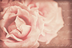 Romance is hidden in the memories of roses (msbellee) Tags: pink flowers roses macro texture floral nikon feminine pastel tan ivory ethereal romantic dreamy etsy creamy softcolors cottagechic totallytexturetuesday