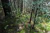 Looking down (mahnoorraja) Tags: trees sea summer tree nature norway 50mm norge woods nikon path walk hard hike trail 55mm hours nikkor preikestolen 18mm madeit