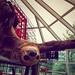 Sloth Hug