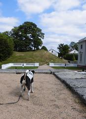 CIMG1541_edited (Charly Hund) Tags: dog charly slott gunnebo dansksvensk grdshund