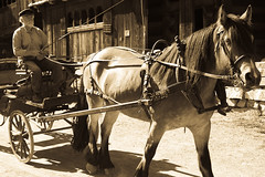 Horse and driver (estenvik) Tags: summer horse oslo norway norge carriage sommer august driver late buggy pferd draft vogn norsk norvegian hst folkemuseum kusk trille 2013 dlahest seinsommer estenvik erikstenvik
