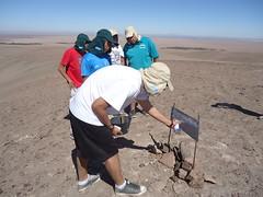 Voluntarios País en Pica, Región de Tarapacá Estudiantes de Turismo del Liceo Padre Alberto Hurtado de Pica, trabajando en la recuperación y limpieza de la senda arqueológica en el sector de Santa Rosita.