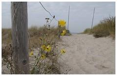 access (czorneboh) Tags: beach strand germany rostock düne markgrafenheide czornebohphoto