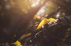 Quiero Descansar (Leonel Gallard) Tags: lighting light sun cute argentina canon photography eos 50mm warm photographer bokeh 365 50 fotgrafo backlighting leonel argentino 50mm18 argentinean ef50mm18 ef50mm gallard ef50f18 60d eos60d