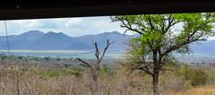 Saf-1983 (kasiahalka) Tags: africa animals southafrica bigfive krugernationalparkgamereserve