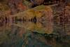 """AUTUNNO ... ("""" paolo ammannati """") Tags: flowers italy panorama mountain me water foglie alberi forest lago italia raw photographer shot top natura io 1001nights acqua autunno colori riflessi alpi viaggi montagna trentino rami bosco foresta tenno lagoditenno paoloammannati effettinaturali blinkagain"""