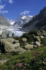 Chamonix-Mont-Blanc, massif du Mont-Blanc, mer de glace (Ytierny) Tags: mer france fleur vertical altitude glacier neige chamonix rocher montblanc glace alpinisme massif hautesavoie et srac grandesjorasses hautemontagne alpesdunord ytierny