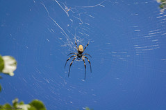 Banana Spider (Tasty_Troposphere) Tags: park river spider florida miami web sony banana fl alpha aleta nex 2013