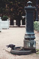 Autumn in Jardin du Palais Royal (Paris in Four Months) Tags: park paris france garden pigeon pigeons 75001 palaisroyal jardindupalaisroyal 1starrondissement