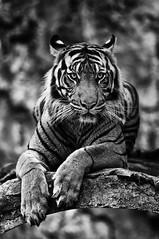 Animals in Jakarta